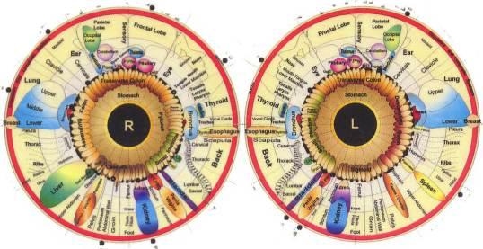 iridology-chart